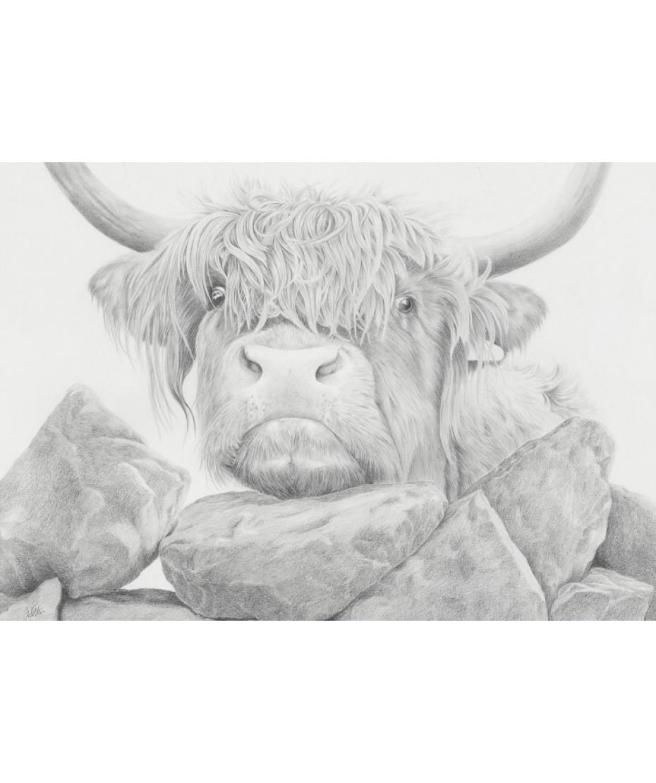 Nosey Cow II